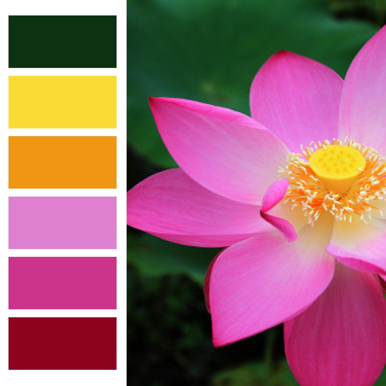 همنشینی رنگها و اصول آن